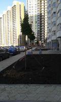 Озеленение второго квартала Переделкино Ближнее