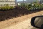 Озеленение территории второго квартала Переделкино Ближнее