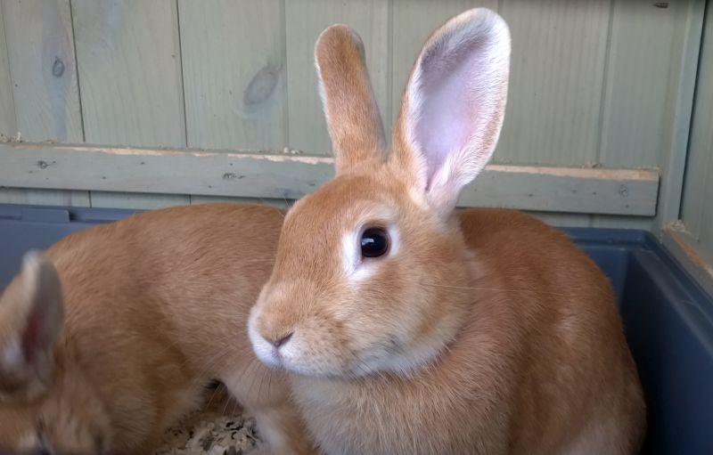 Кролик у офиса продаж Переделкино Ближнее