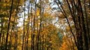 Чоботовский лес