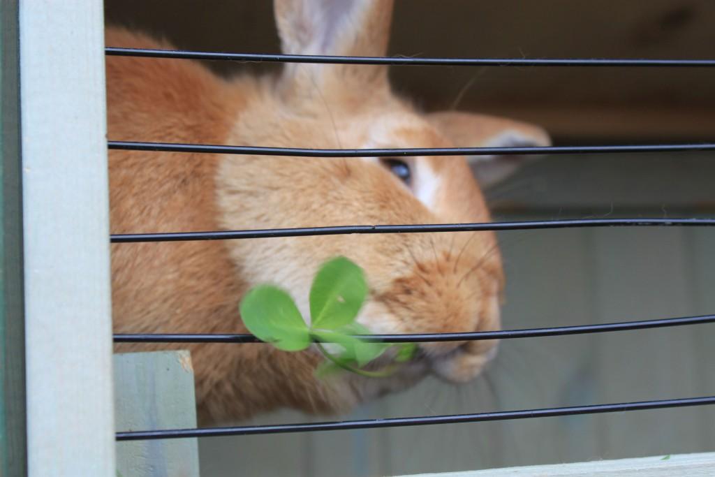 Кролик из ОП