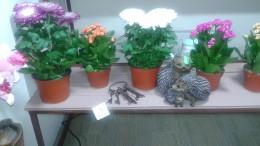 Ассортимент магазина цветы в Переделкино Ближнее